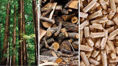 L'industrie forestière au secours du climat